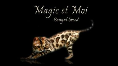 banner van cattery Magic et Moi