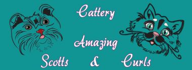 banner van cattery van Amazing Scotts and Curls