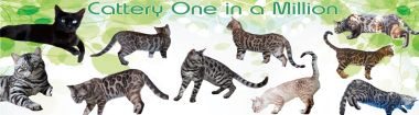 banner van cattery One in a Million
